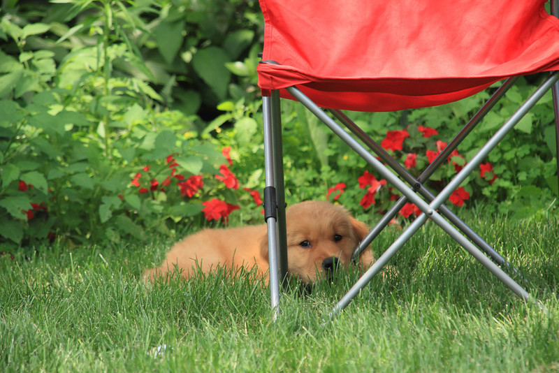 Resting in the yard