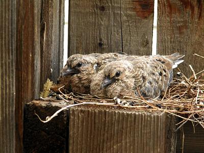 2009-06-06 New Neighbors