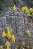Aspens in Phantom Canyon