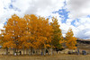 Mt. Pisgah Cemetery