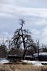Tree at Vedauwoo