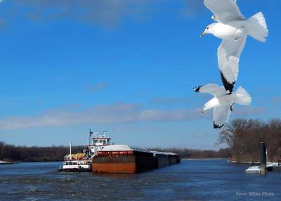 xriver birds