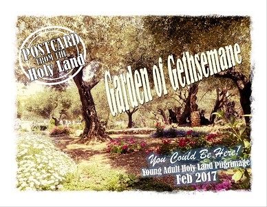 Young Adults Holy Land Pilgrimage 2017