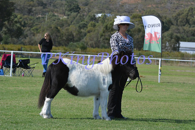 Ring 1 Grand Champion Foal & Yearling