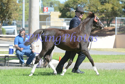 Ring 1 Grand Champion Foal & Grand Champion Yearling