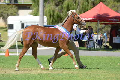 Ring 2 Grand Champion Foal & Grand Champion Yearling