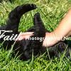 Puppy Time2l©2014MelissaFaithKnight-1458