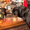 Rottweilers NV with Diane Ciminero  ©2017MelissaFaithKnightFaithPhotographyNV_8144
