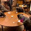 8x12 Unedited CANDID SRO Rottweilers NV with Diane Ciminero  ©2017MelissaFaithKnightFaithPhotographyNV_8203