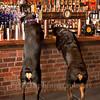 Rottweilers NV with Diane Ciminero  ©2017MelissaFaithKnightFaithPhotographyNV_8192