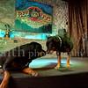 Rottweilers NV with Diane Ciminero  ©2017MelissaFaithKnightFaithPhotographyNV_8014