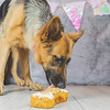 puppy-cake-smash-48