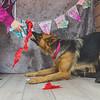puppy-cake-smash-126