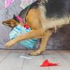 puppy-cake-smash-143