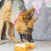 puppy-cake-smash-49