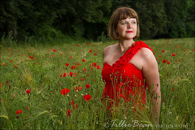 In the Poppy Field
