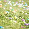 Egg Hunt_20170415_0049