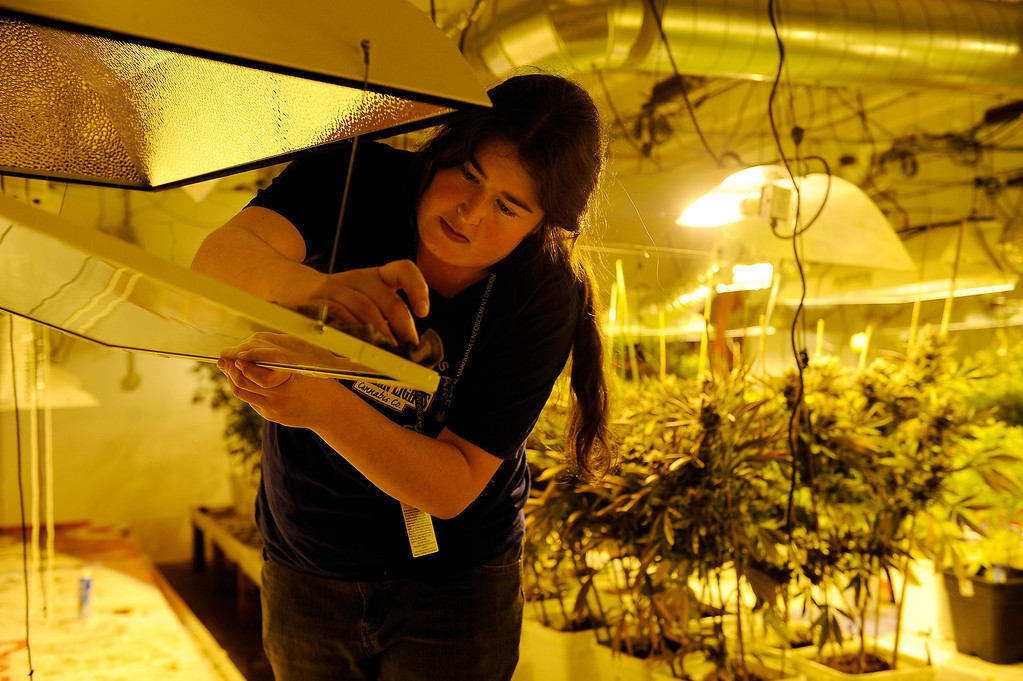 . DENVER, CO - MARCH 27: Hollie Cooper cleans a set of grow lights after harvesting the cannabis plants it was help grow at Northern Lights grow facility in Denver, Colorado on March 27, 2014. The retail marijuana business has been booming in Edgewater. No crime or problems have been reported to police by retail marijuana businesses since legal recreational sales began on January 1st.(Photo by Seth McConnell/The Denver Post)