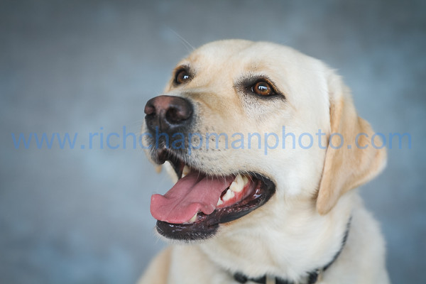 Rich, Chapman, Photographers, Algonquin, Photography, Illinois, Area, Public, Library, Paws, Reading, Your, Pet, Pet's, Tale