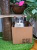 Jeni-Foster-Cat-1013
