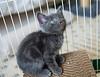 Seattle-kittens-2058