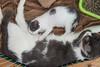 Jeni-Foster-Cat-1044