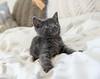 Seattle-kittens-2050