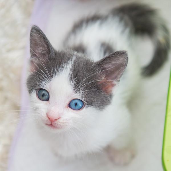 Jeni-Foster-Cat-1019
