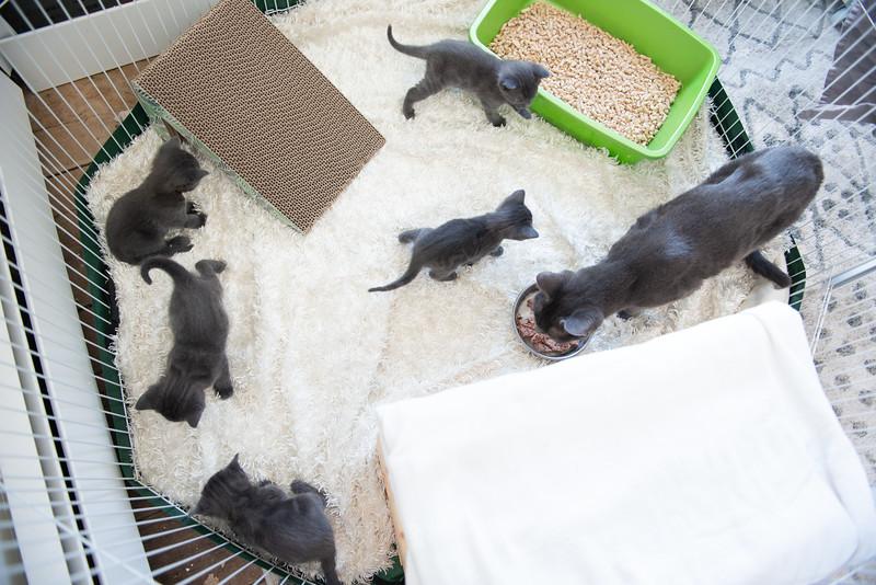 Seattle-kittens-2023