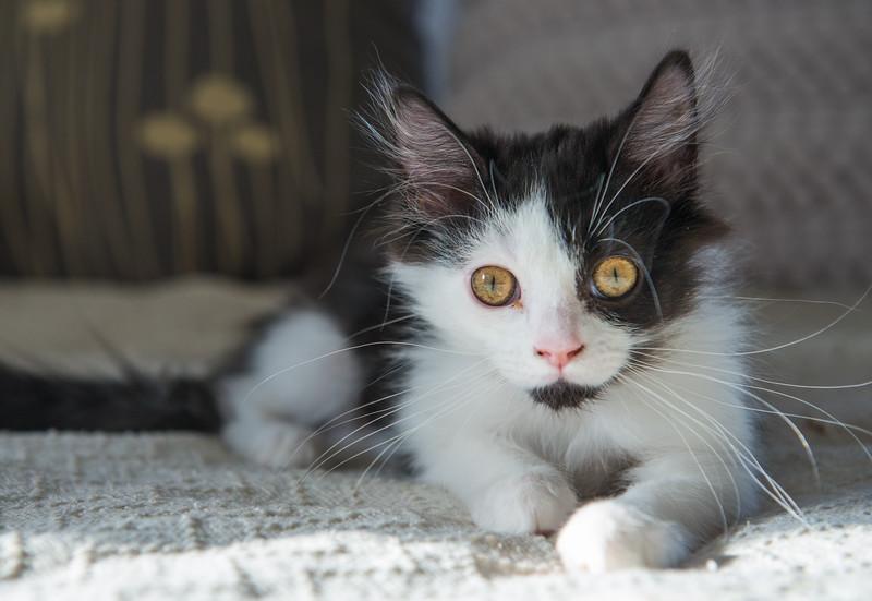 cats-2009