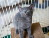 Seattle-kittens-2057