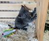 Seattle-kittens-2028