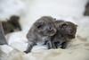 Seattle-kittens-2003