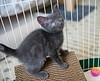 Seattle-kittens-2056