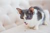 Jeni-Foster-Cat-1011
