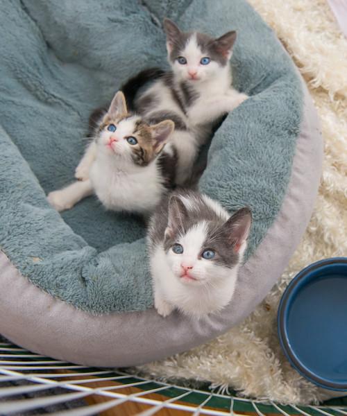 Jeni-Foster-Cat-1024