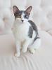 Jeni-Foster-Cat-1012