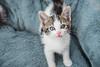 Jeni-Foster-Cat-1032