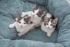 Jeni-Foster-Cat-1005