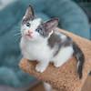 Jeni-Foster-Cat-1028