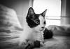 cats-3005