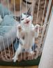 Jeni-Foster-Cat-1037