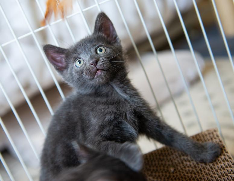 Seattle-kittens-2059