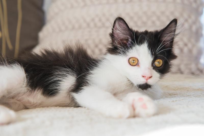 cats-2007