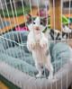 Jeni-Foster-Cat-1042