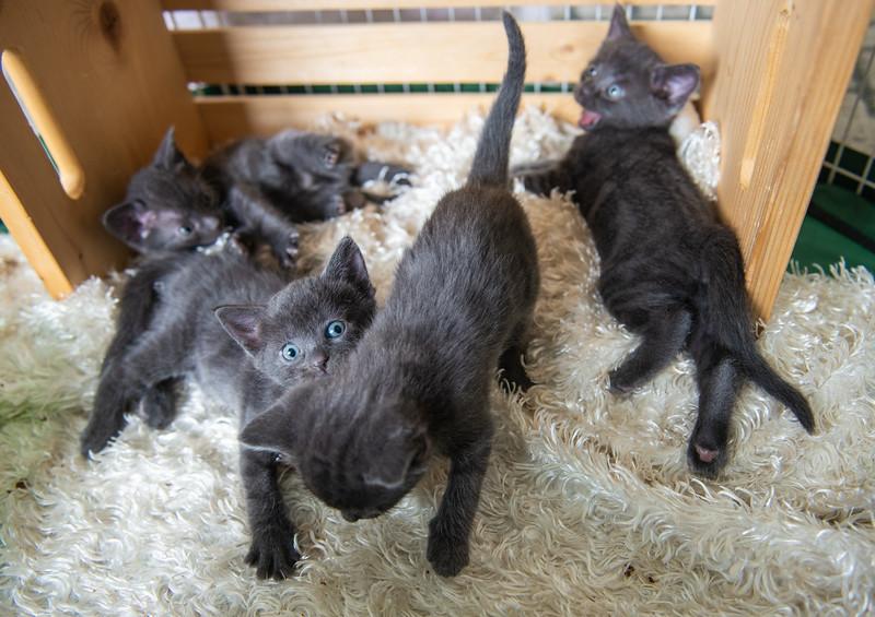 Seattle-kittens-2033