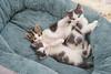 Jeni-Foster-Cat-1021