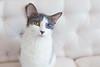 Jeni-Foster-Cat-1008