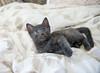 Seattle-kittens-2046