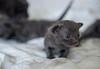 Seattle-kittens-2002